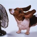 Cibi da evitare in estate: quali sono per il nostro benessere?