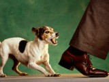 cane-aggressivo-ringhia[1]