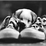 La posta di Prosdocimi – humor con la cagnolina più cinica del web