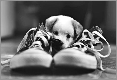 La posta di Prosdocimi - humor con la cagnolina più cinica del web
