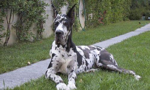 Monza, cane poliziotto accusato di essere fascista