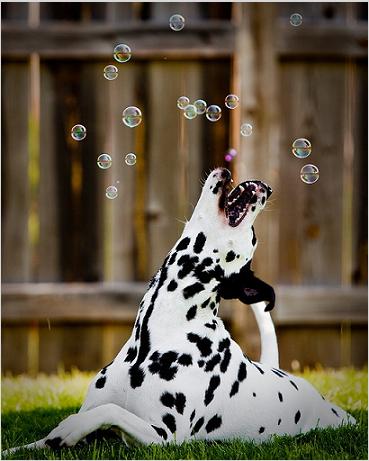 Prosdocimi e le bolle di sapone - racconto comico