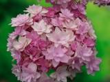 prosdocimi e otto fiori