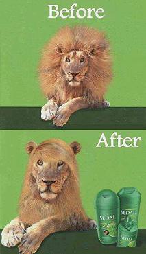 simpatico leone