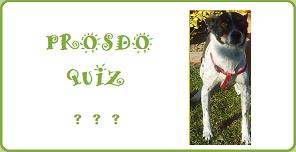 Quiz & Humor