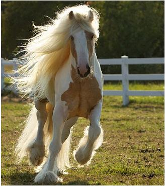 Test - che cavallo sei? Divertiti con Prosdocimi!