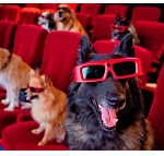 I QUIZ DI PROSDOCIMI – Cinema e TV