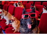 cane al cinemaevidenza