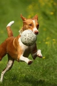 Quiz sul calcio, gioco & humor