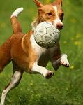 Calcio: i quiz di prosdocimi