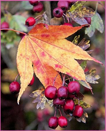 autunno di peppa