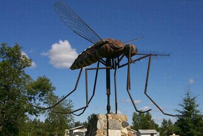 18Cose curiose sulle zanzare  – Parte 1^