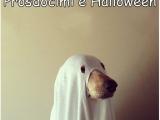 Prosdocimi e Halloween - racconto comico