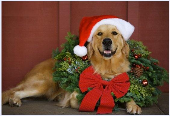 Prosdocimi, Babbo Natale e il mercatino - racconto comico