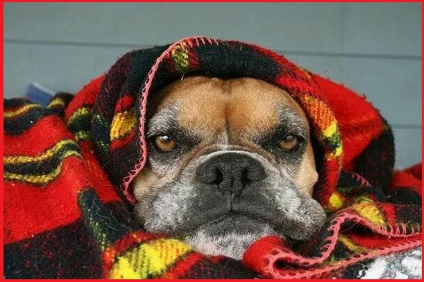 Natale con Prosdocimi, la cagnolina più cinica del web!