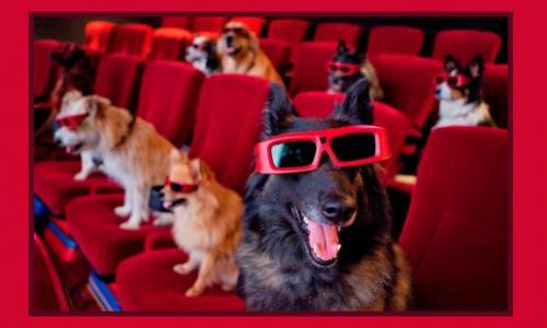 Cinema quiz: qual è il film?
