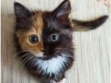 Cosa mangia il gatto e come fargli la toelettatura