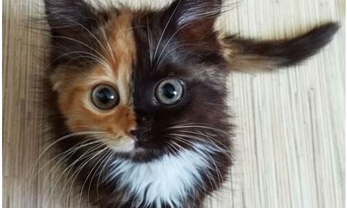 Cosa mangia il gatto e come lavarlo in casa