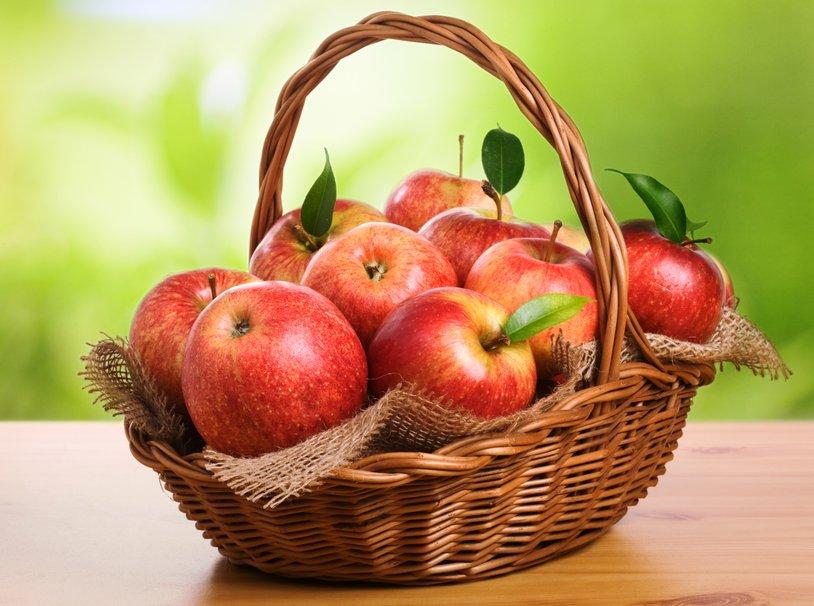 dieta lebootcamp mela