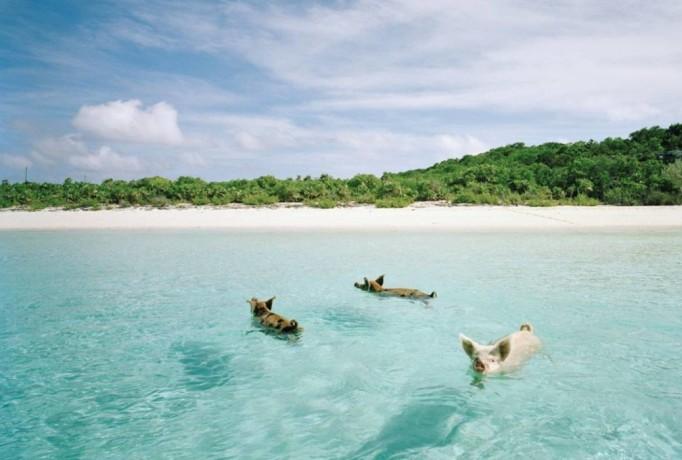 Pig Beach, Big Maggiore Cay, Bahamas