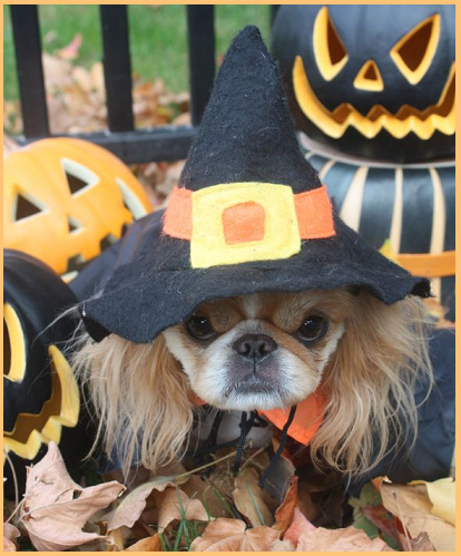 Curiosità Halloween: chicche e tradizioni