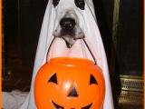 Curiosità Halloween: simpatiche chicche, umorismo, tradizioni e foto