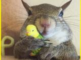 jill scoiattolo