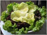 Le proprietà dell'insalata