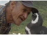 Dindim, il pinguino che torna ogni anno dall'amico pescatore