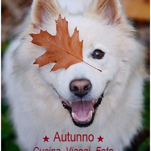 I mille motivi per vivere un autunno bellissimo
