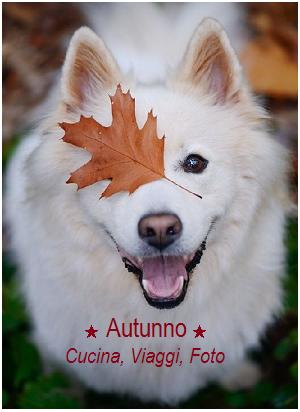 Prosdocimi in autunno