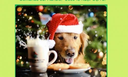 Natale: curiosità, tradizioni e leggende sugli addobbi, il presepe, musica e gastronomia