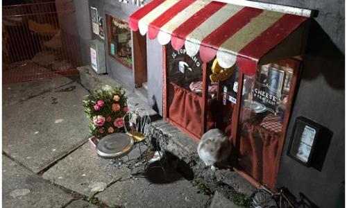 Ristorante e mini negozio per topi realizzati da AnonyMouse
