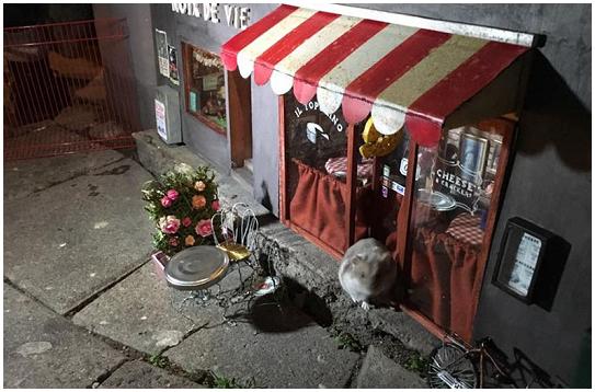 Ristorante e mini negozio per topi aperti a Malmo (Svezia)