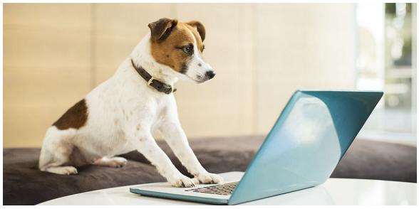 Lavorare con gli animali professioni perfette anche per i for Lavorare con i cani