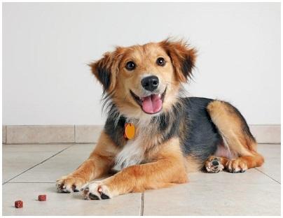 Giochi Enigmistica Che cane è?