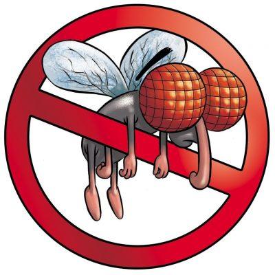 Allontanare le mosche con rimedi naturali e senza repellenti