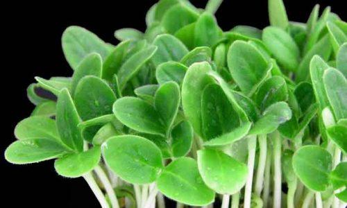 Crescione: ortaggio ricco di proprietà ed effetti benefici