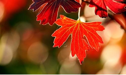 Come riciclare le foglie d'autunno