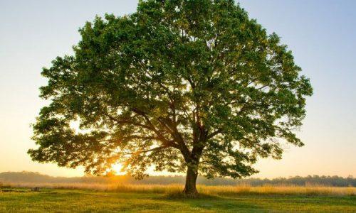 Bimbo dona soldi per ripiantare gli alberi abbattuti dal maltempo