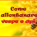 Allontanare vespe e api: ecco i consigli della nonna