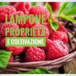 Il lampone: proprietà e coltivazione in casa