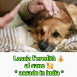Indiano 50enne lascia eredità al cane